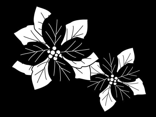 二輪のポインセチアの白黒イラスト