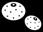 みかん二個の白黒イラスト