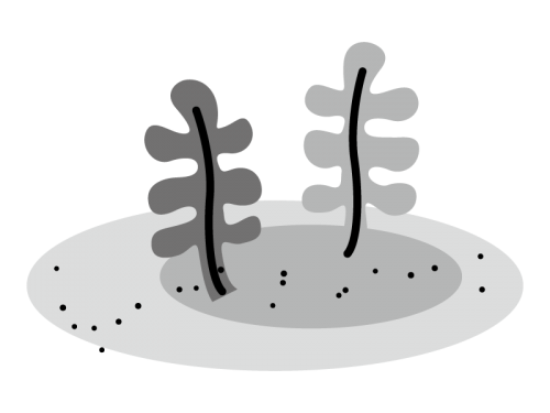 わかめなどの海藻類の白黒イラスト かわいい無料の白黒イラスト モノぽっと